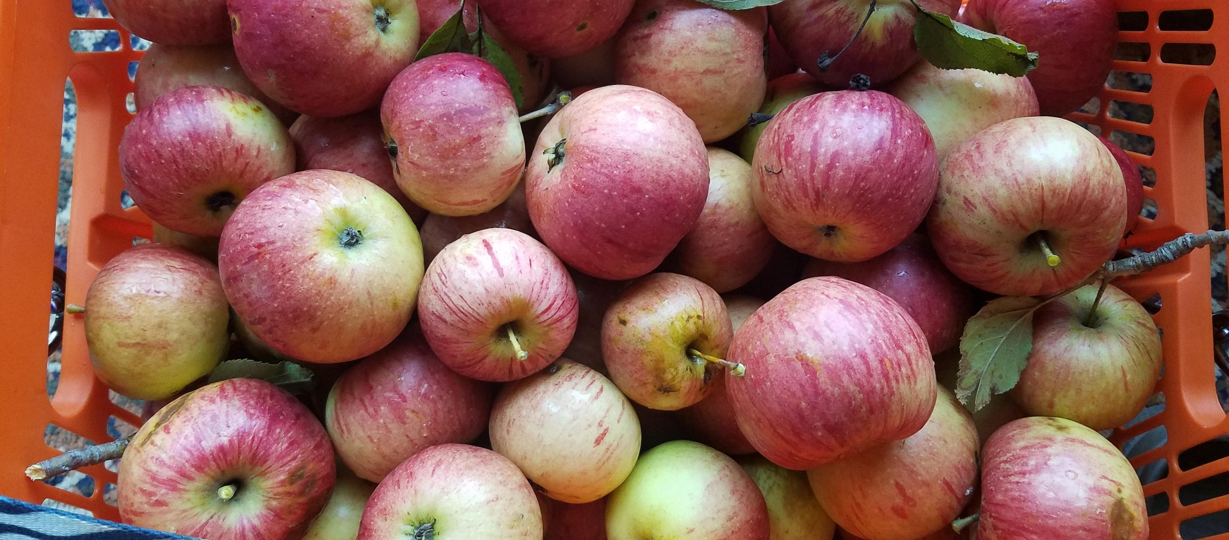 2019 apples
